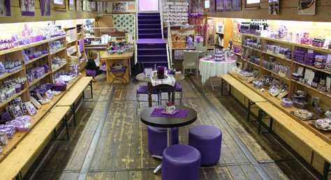 toulouse_474x258_violette.jpg