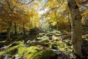 3-parque-natural-del-moncayo-zaragoza