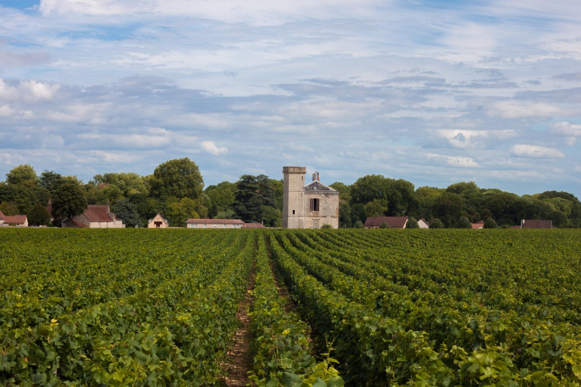 Nantes y sus viñedos