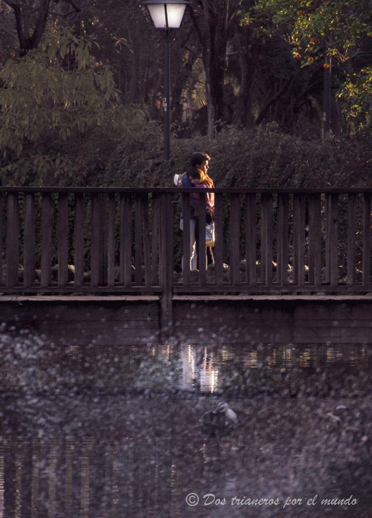 puente de los pájaros sevilla