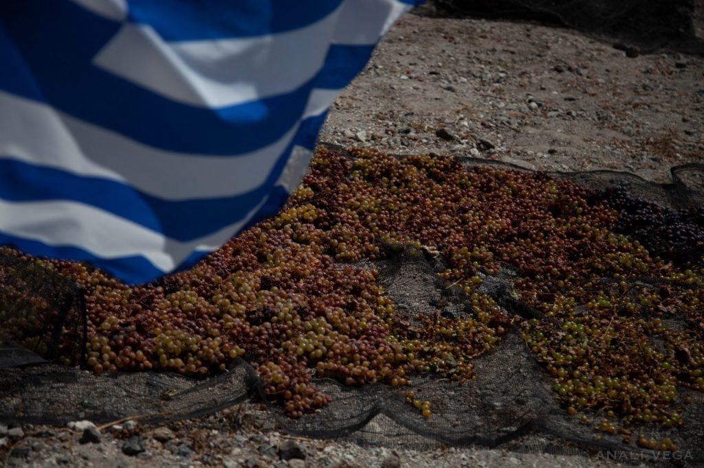 vinsanto grapes