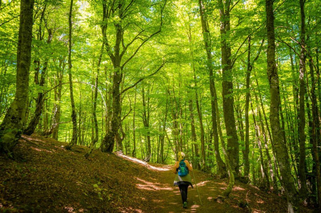 Tabayón del Mongallu parque de redes bosque